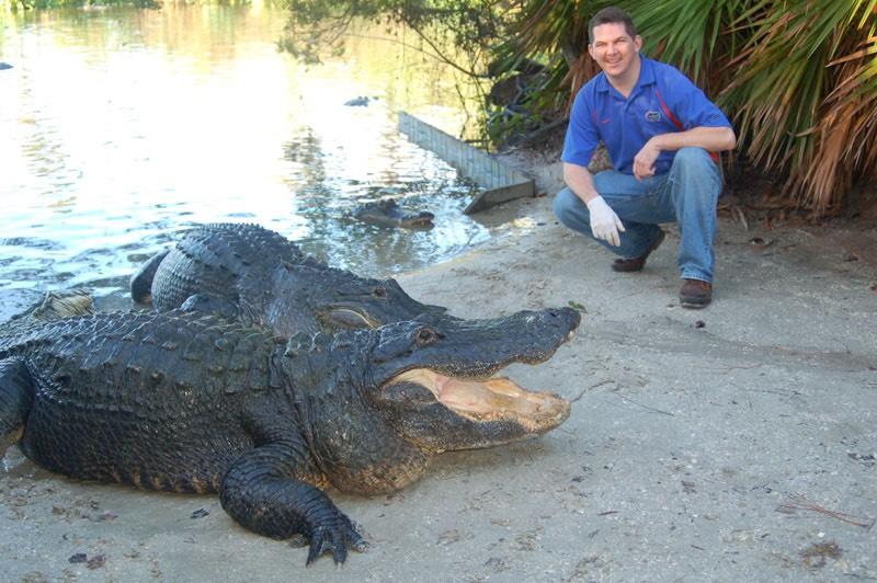 Tampa DUI lawyer Elliott Wilcox hand-feeding alligators